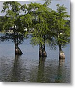 Three Trees Metal Print by Cim Paddock