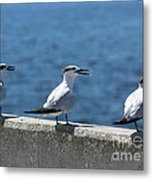Three Turning Terns Metal Print