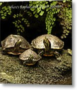 Three Turtles Metal Print