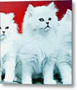 Three White Cats Metal Print