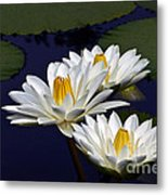 Three White Tropical Water Lilies Version 2 Metal Print