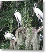 Three Wood Storks Metal Print