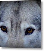 Through A Wolf's Eyes Metal Print