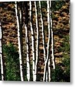 Through The Aspens Metal Print