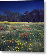 Through The Blooming Fields Metal Print