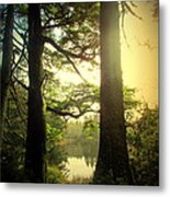 Through The Forest To The Lake Metal Print
