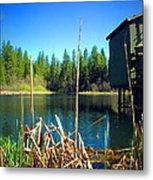 Through The Reeds At Grace Lake Metal Print