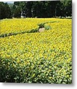 Through The Sunflowers Metal Print