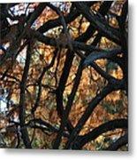 Through The Trees 2 Metal Print
