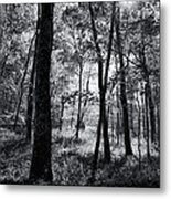 Through The Trees In Black And White Metal Print