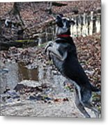 Throwing Stones Metal Print