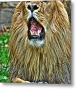 Thunder Vocals Of Lazy Boy At The Buffalo Zoo Metal Print