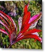 Red Ti Plant Metal Print