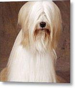 Tibetan Terrier Dog Metal Print