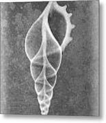 Tibia Sea Shell X-ray Art Metal Print