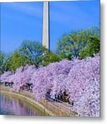 Tidal Basin And Washington Monument With Cherry Blossoms Vertical Metal Print