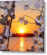 Tidal Basin Sunset With Cherry Blossoms Metal Print