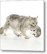 Tiffanie Cat And Kitten Metal Print