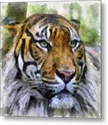 Tiger 26 Metal Print