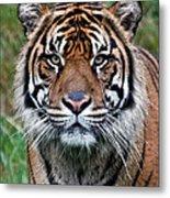 Tiger Stripes Metal Print