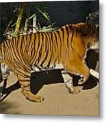 Tiger Beat Metal Print