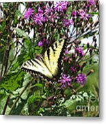 Tiger Butterfly Metal Print