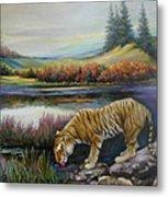 Tiger By The River Metal Print by Svitozar Nenyuk