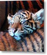 Tiger Cub Nap Metal Print
