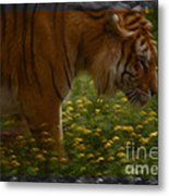 Tiger In The Midst Of Buttercups Metal Print
