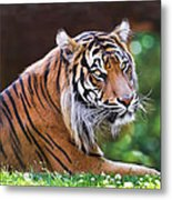 Tiger In The Sun Painting Metal Print
