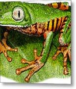 Tiger-legged Monkey Frog Metal Print