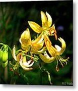 Tiger Lily Metal Print by Tammy Wallace