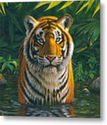 Tiger Pool Metal Print
