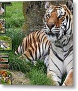 Tiger Poster 1 Metal Print