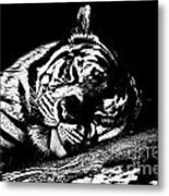 Tiger R And R Black And White Metal Print