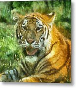 Tiger Resting Photo Art 05 Metal Print