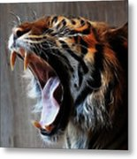 Tiger Roar Metal Print