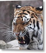 Tiger Smile Metal Print