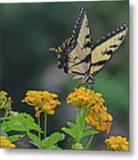 Tiger Swallowtail And Lantana Metal Print