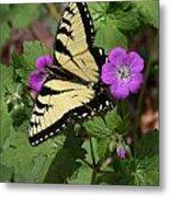 Tiger Swallowtail Butterfly On Geranium Metal Print