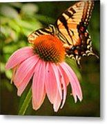 Tiger Swallowtail Feeding Metal Print