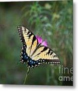 Tiger Swallowtail I Believe Metal Print