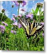 Tiger Swallowtail On Pincushion Flowers Metal Print
