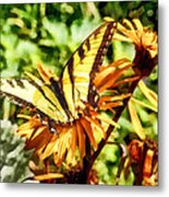 Tiger Swallowtail On Yellow Wildflower Metal Print