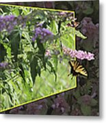 Tiger Swallowtail Oob-featured In Beautycaptured-oof-harmony And Happiness Metal Print