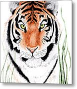 Tiger Tiger Where Metal Print