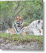 Tiger Time Metal Print
