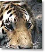 Tiger Water Metal Print