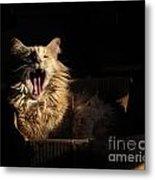Tiger Yawn Metal Print