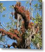 Tikal Furry Tree Closeup Metal Print